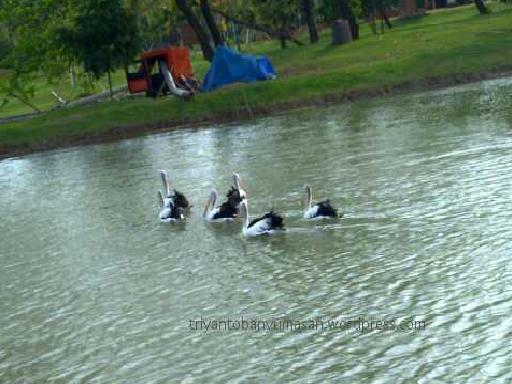 swimming in Piss ( Danau Ecopark  )
