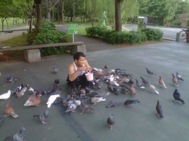 Merpati burung dara